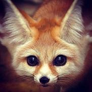 Фотография irina fox